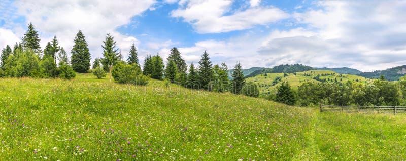 Prado com wildflowers e uma linha de árvore imagens de stock