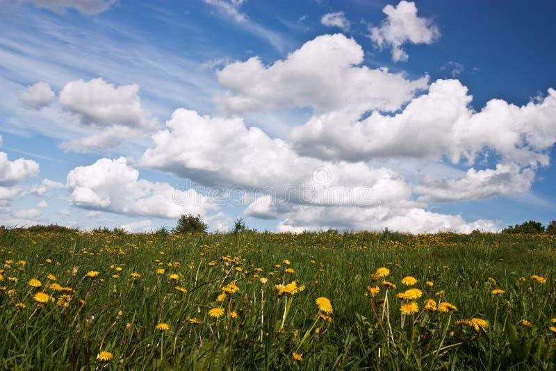 Prado con fowers y el cielo azul imagenes de archivo