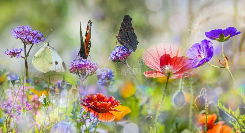 Prado con las amapolas y las mariposas rojas imagen de archivo