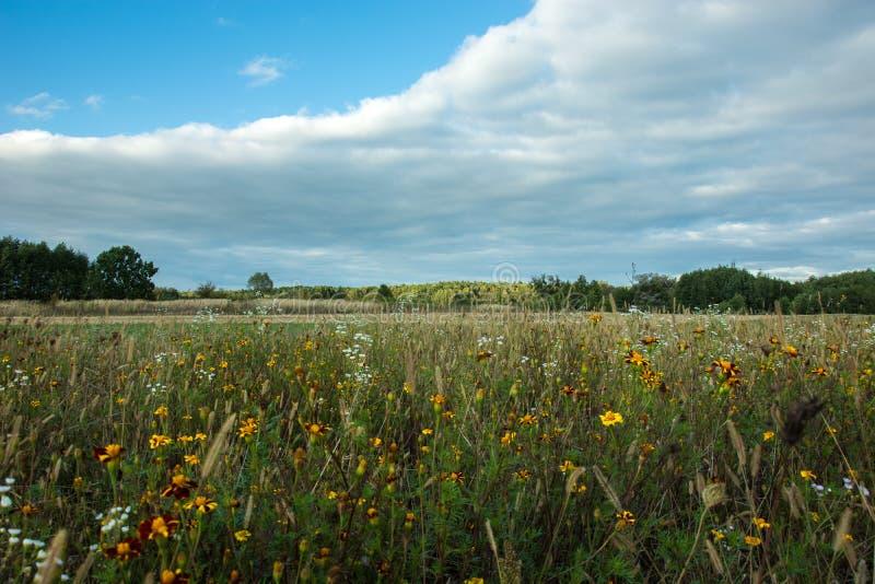 Prado con las flores, el bosque y la nube amarillos en el cielo azul fotos de archivo