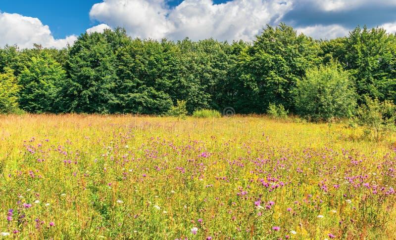 Prado con las hierbas salvajes en el borde del bosque fotos de archivo