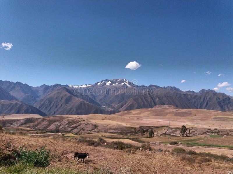 prado con las montañas y el fondo nevoso foto de archivo libre de regalías