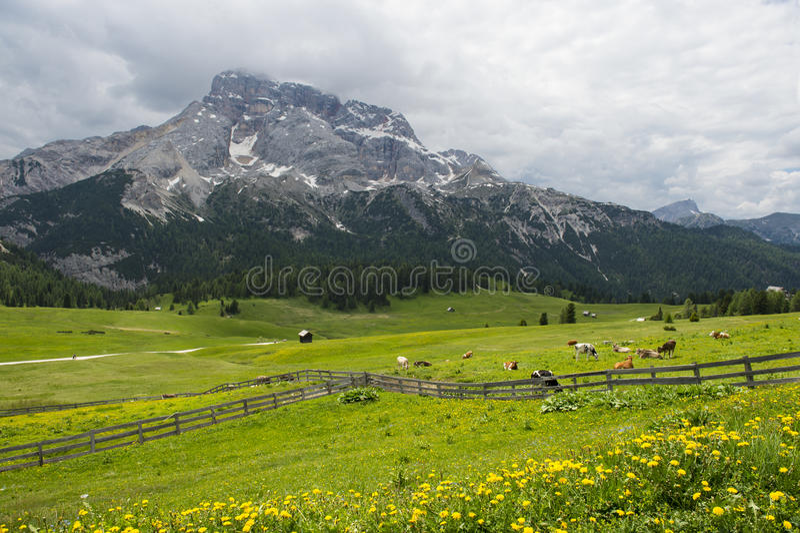Prado con las vacas rodeadas por la cerca de madera en las montañas imagen de archivo libre de regalías