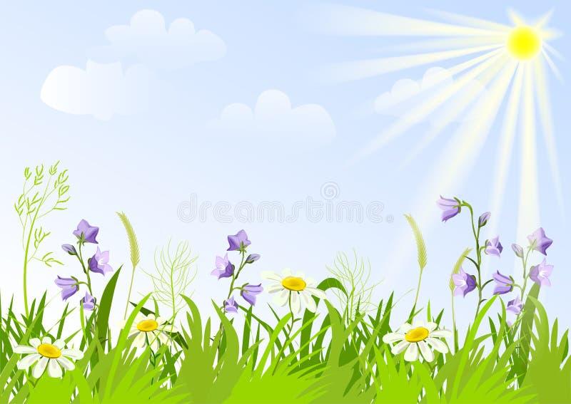 Prado con los wildflowers ilustración del vector