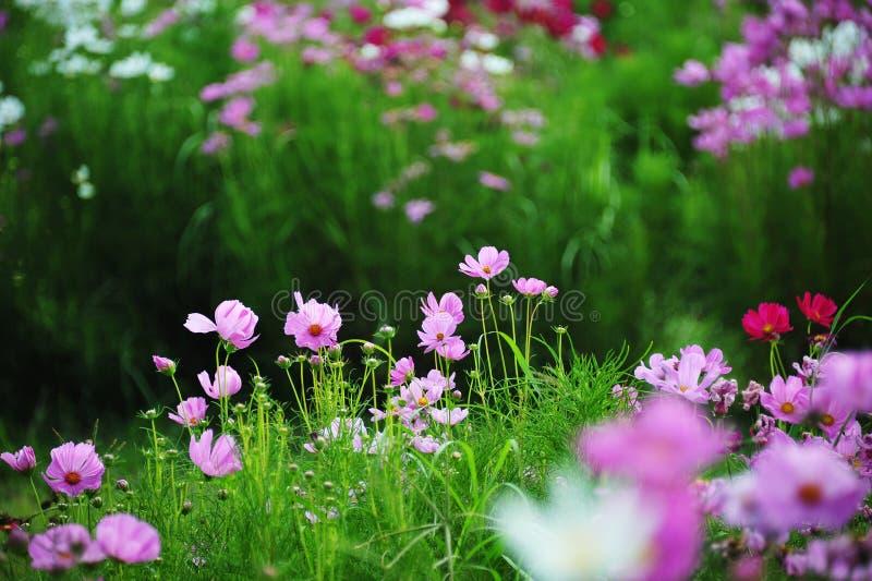 Prado da flor da mola fotografia de stock