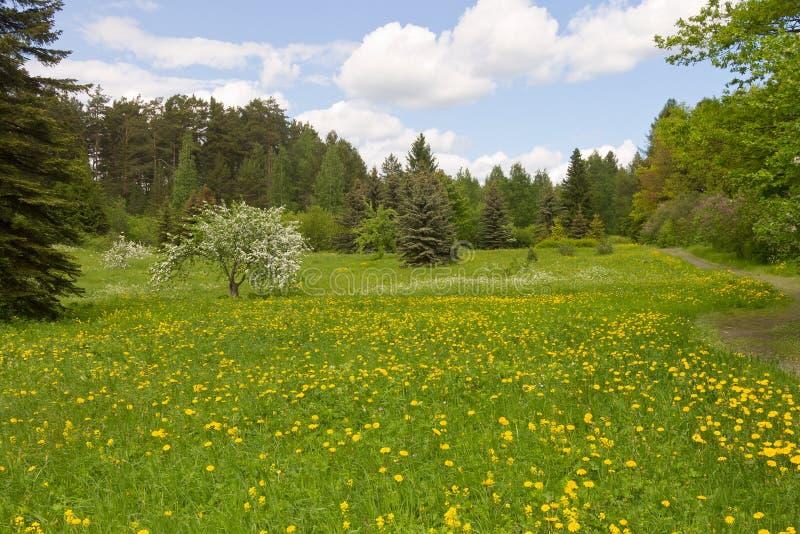 Prado da floresta fotografia de stock