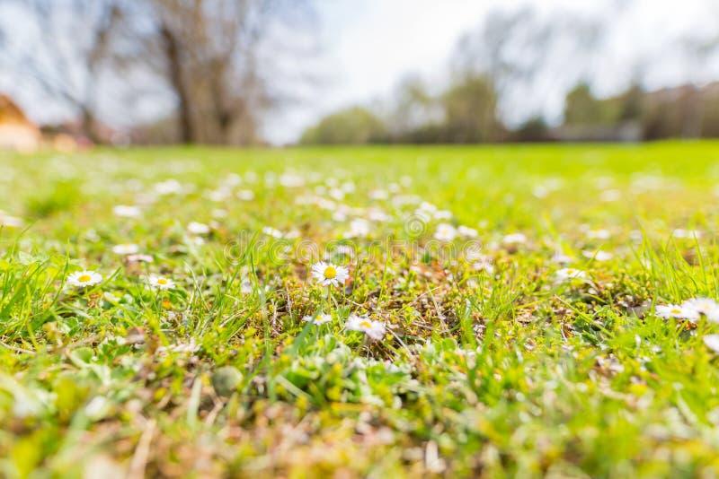 Prado da grama da mola e paisagem idílico borrada na primavera fotografia de stock royalty free