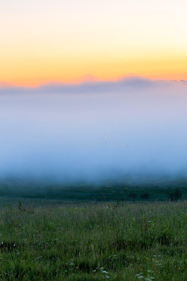 Prado da grama selvagem de Minimalistic sob a névoa do dence sem a árvore na manhã do verão imagens de stock royalty free