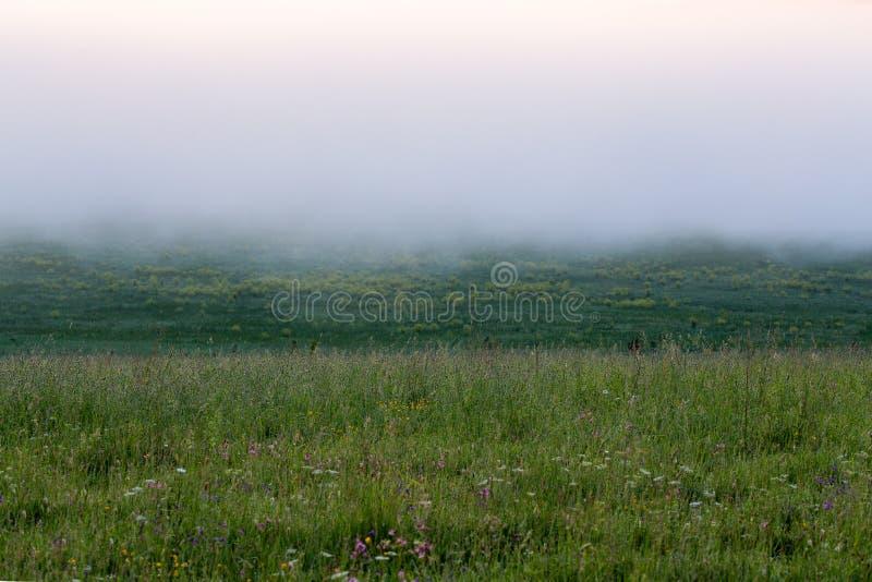Prado da grama selvagem de Minimalistic sob a névoa do dence sem a árvore na manhã do verão foto de stock royalty free