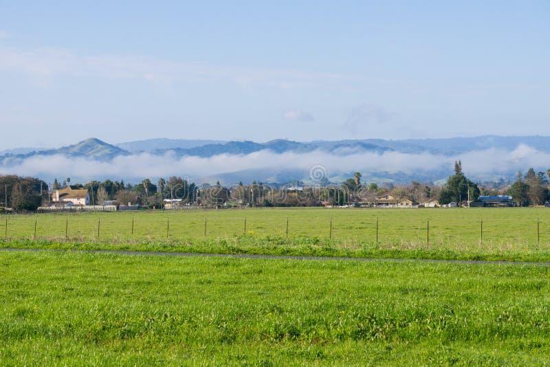 Prado da grama verde; névoa atrasando-se no fundo, lago coyote - Harvey Bear Park, Morgan Hill, Califórnia imagens de stock royalty free