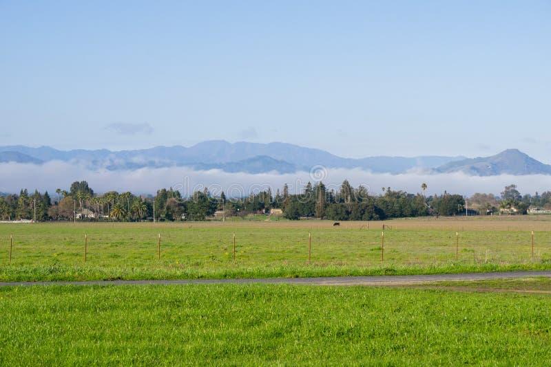 Prado da grama verde; névoa atrasando-se no fundo, lago coyote - Harvey Bear Park, Morgan Hill, Califórnia foto de stock royalty free