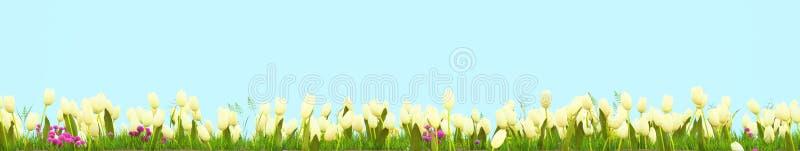 Prado da mola com flores ensolaradas rendição 3d ilustração do vetor