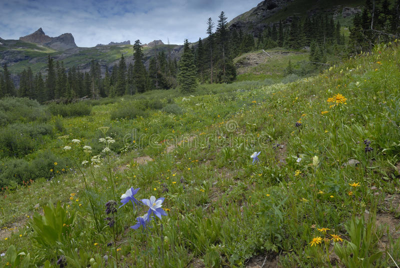 Prado da mola em montanhas de San Juan em Colorado fotografia de stock