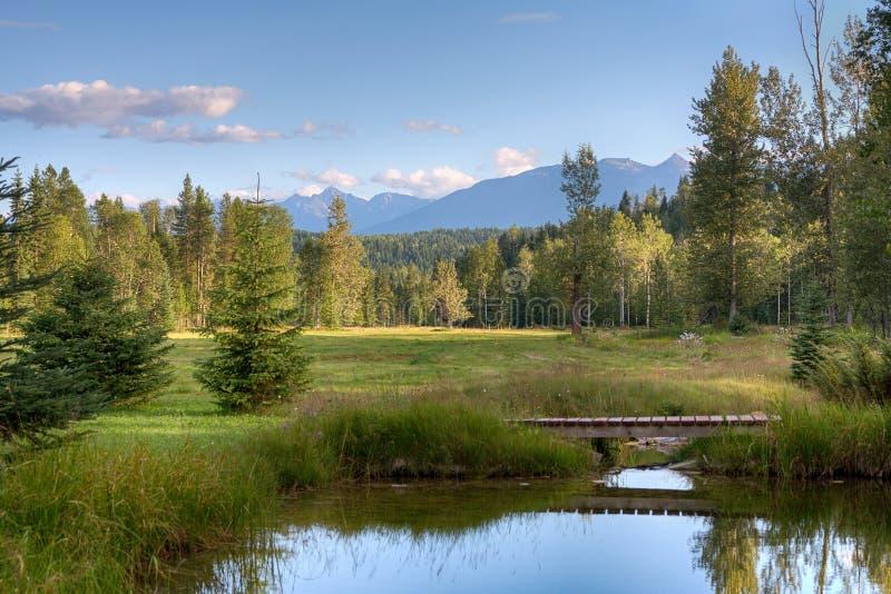 Prado da montanha no Columbia Britânica fotografia de stock