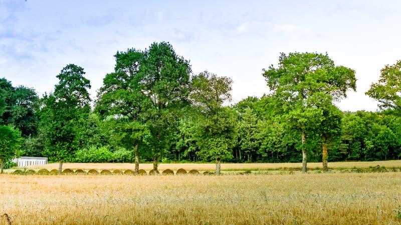 Prado da terra com o pacote da palha no por do sol Franc?s Brittany imagem de stock