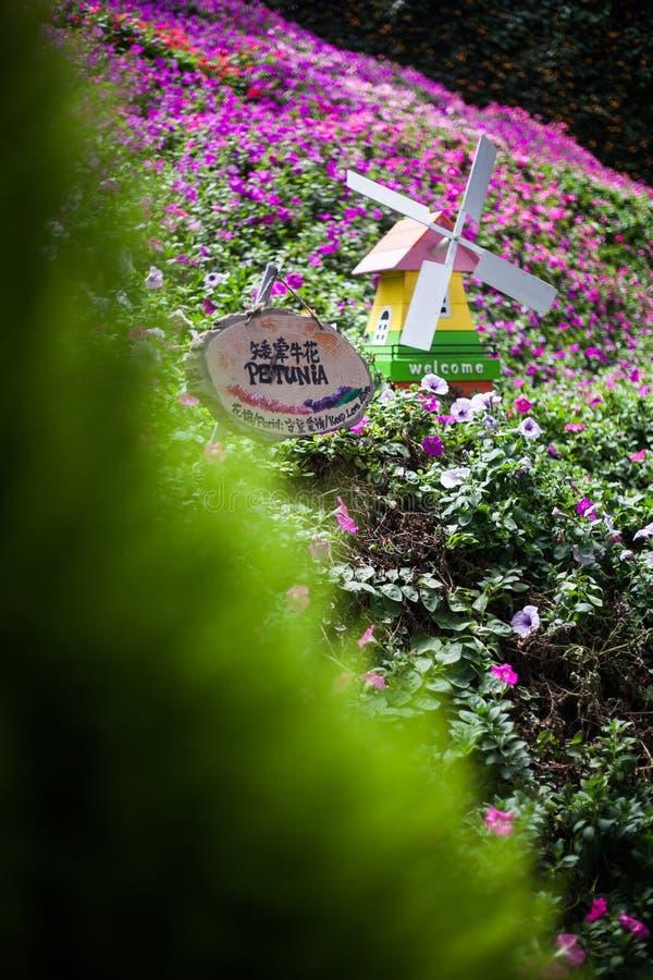 Prado de flores con el molino de viento decorativo en Cameron Highlands, Malasia fotografía de archivo libre de regalías