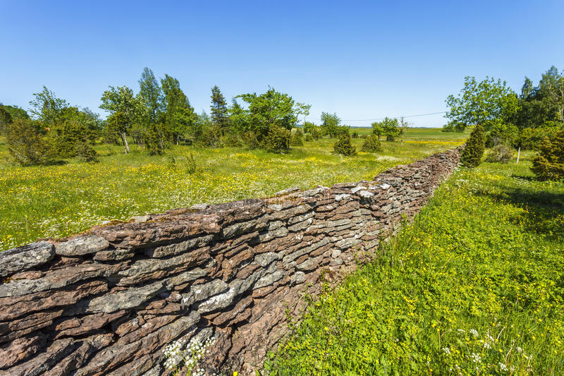 Prado de florescência com uma parede de pedra imagens de stock royalty free