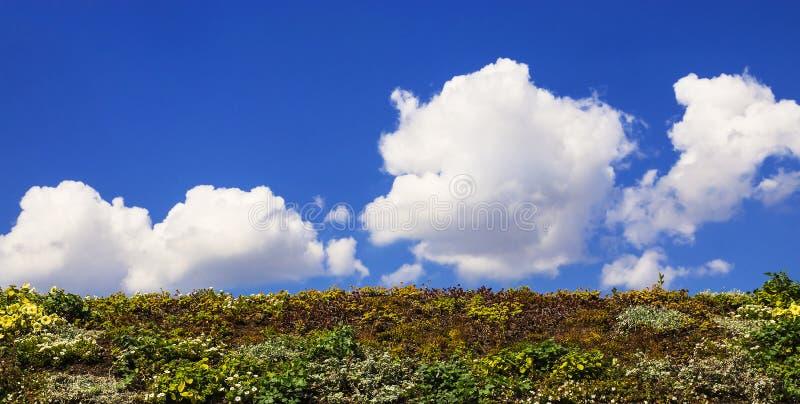Prado de florescência contra o céu azul foto de stock royalty free