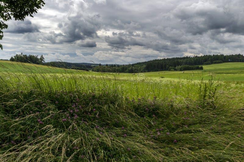 Prado de florescência sob nuvens e floresta de tempestade imagem de stock royalty free