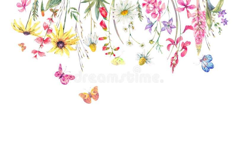 Prado de la acuarela herbario, manzanilla y mariposas libre illustration