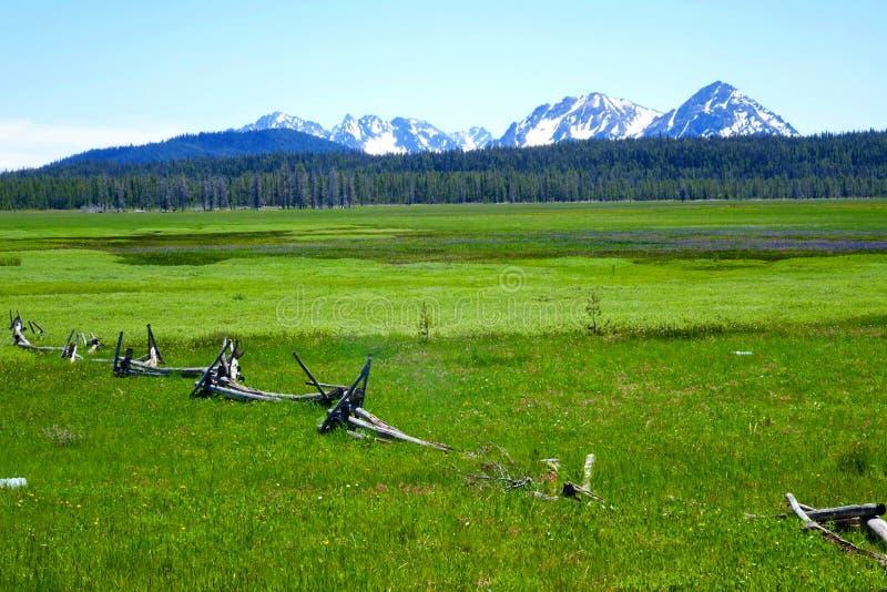 Prado de la alta montaña - Idaho imagen de archivo libre de regalías