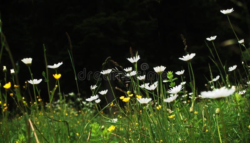 Prado de la flor imagen de archivo
