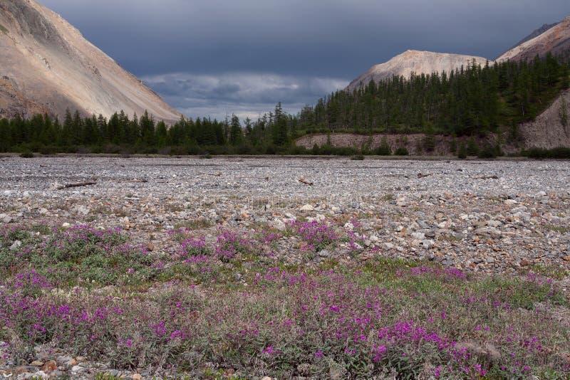 Prado de la flor en la cama de río fotografía de archivo