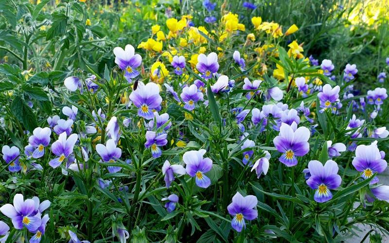 prado de la flor de flores coloridas fotografía de archivo