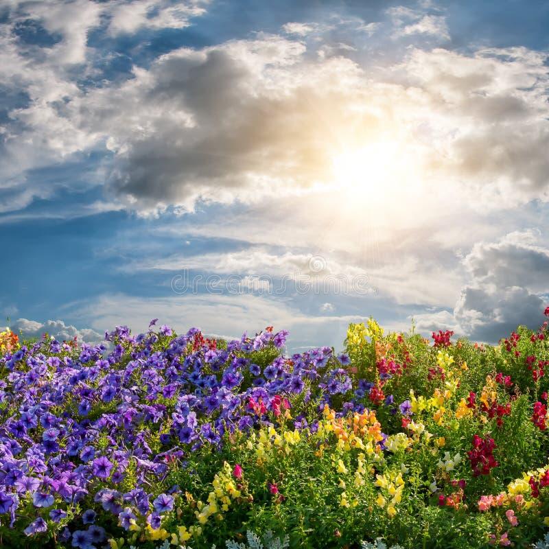 Prado de la flor y nubes majestuosas foto de archivo