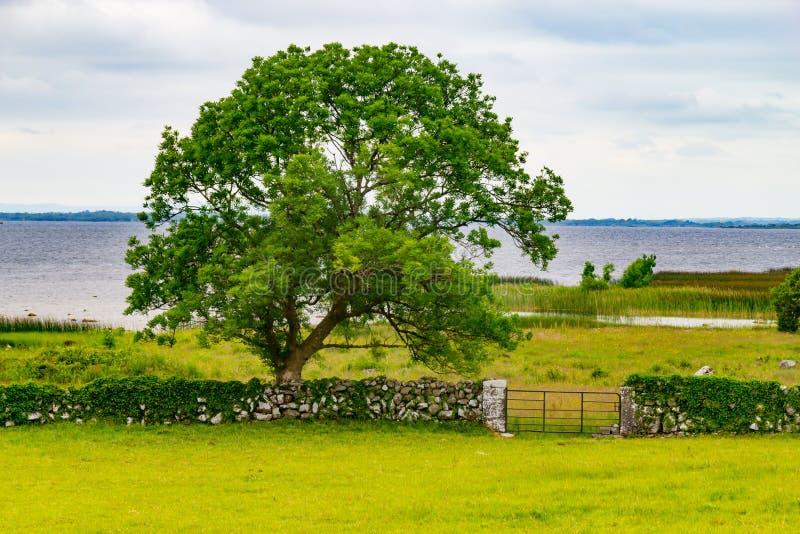 Prado de la granja con el lago Corrib en fondo imágenes de archivo libres de regalías