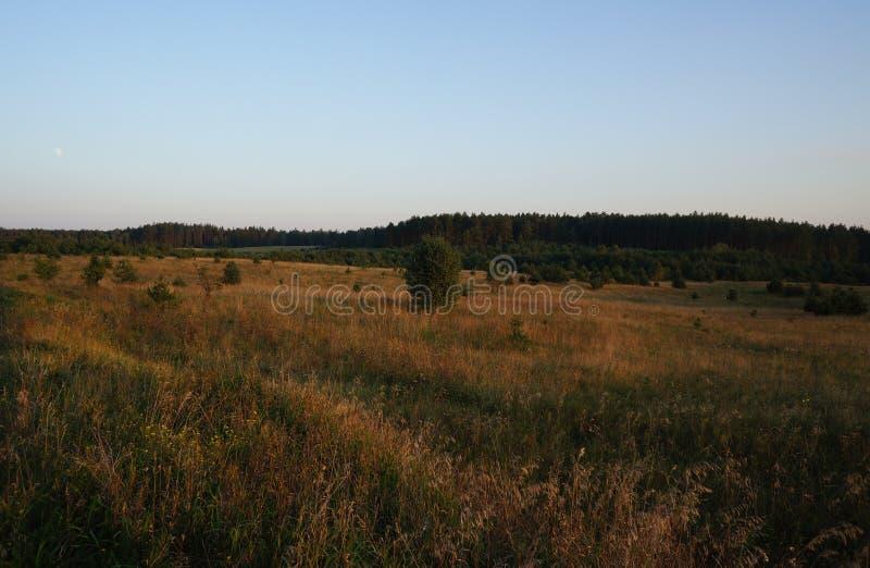 Prado de la hierba del oro en Masuria polaco (Mazury) fotos de archivo