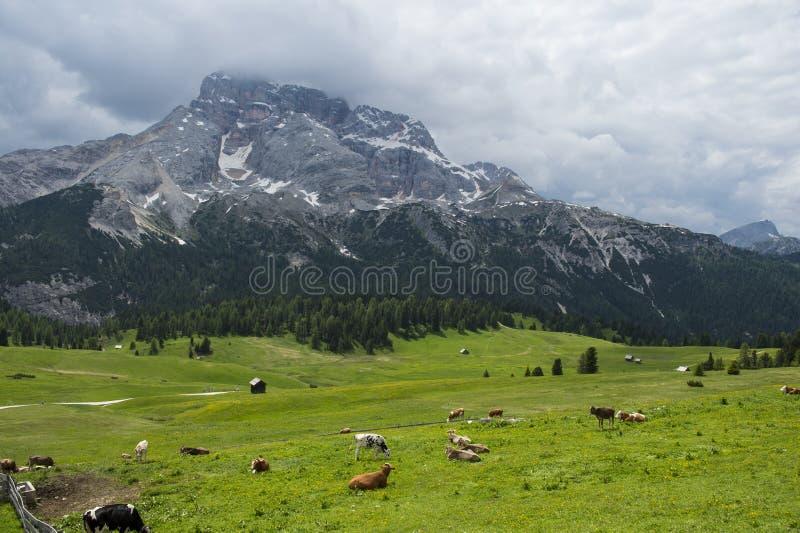 Prado de la hierba verde en las montañas de Italia imagen de archivo libre de regalías