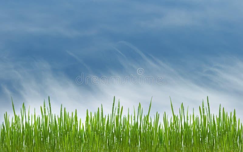 Prado de la hierba verde y del azul cielo cloudly