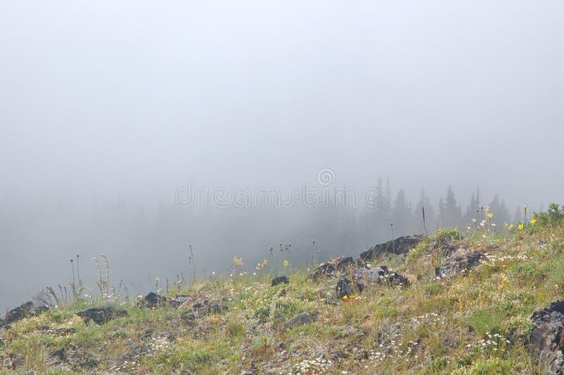 Prado de la montaña imagen de archivo