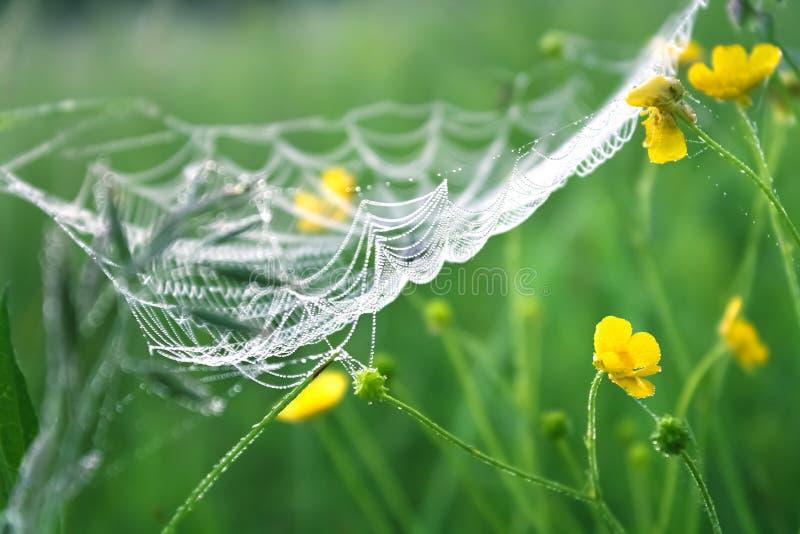 Prado de la primavera con la hierba verde y el web de araña blanco, backgr de la falta de definición fotografía de archivo libre de regalías