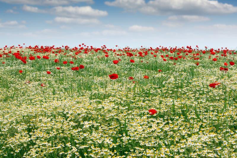 Prado de la primavera con paisaje de las flores salvajes fotos de archivo