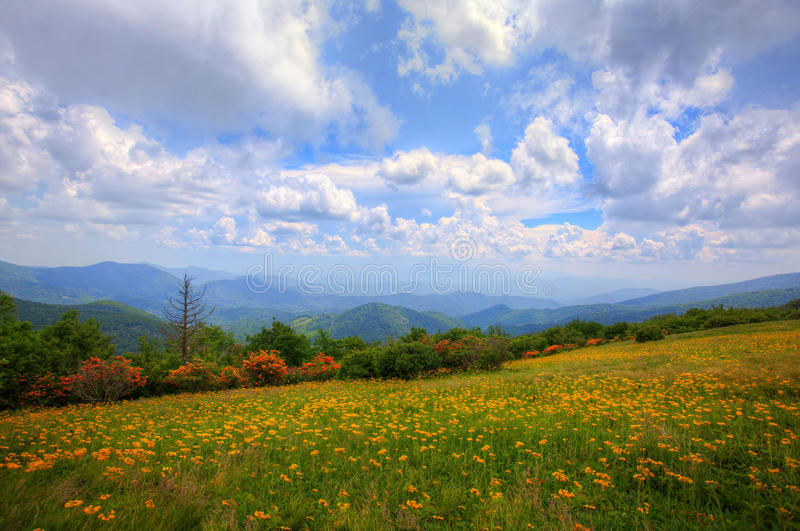 Download Prado de las montañas foto de archivo. Imagen de hierba - 41901276