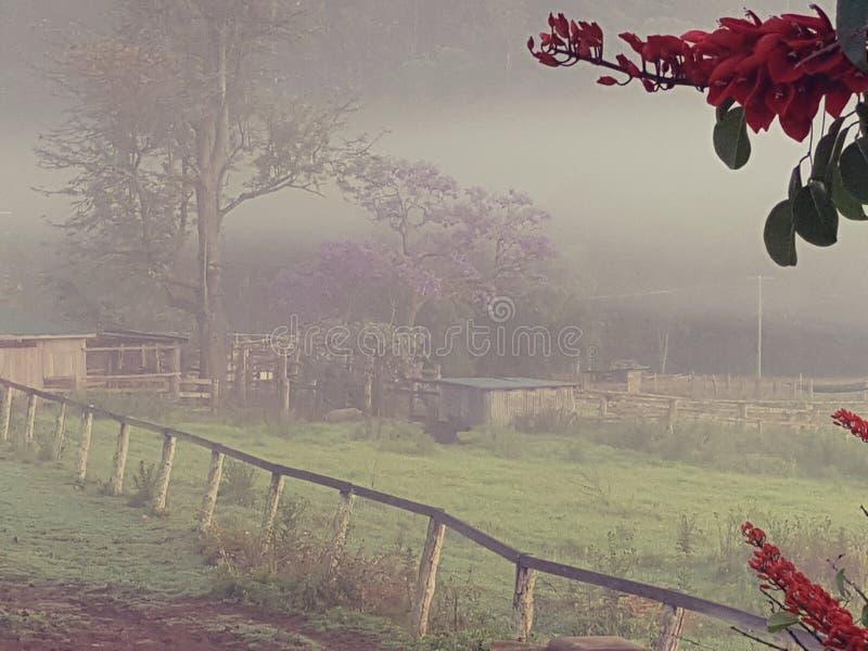 Prado de niebla de la mañana del país con las vertientes de la granja imágenes de archivo libres de regalías