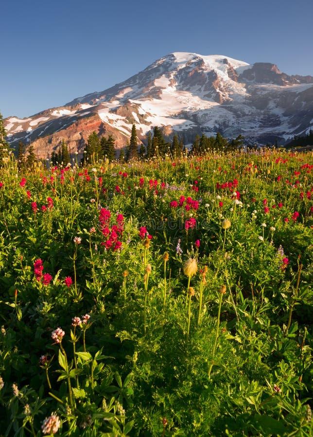 Prado de Rainier National Park Mountain Paradise de la gama de la cascada fotos de archivo libres de regalías