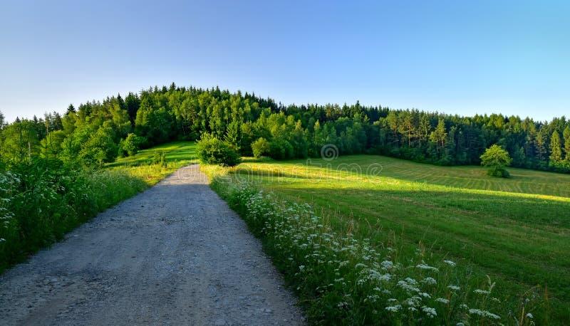 Prado del bosque del paisaje de la naturaleza fotografía de archivo libre de regalías