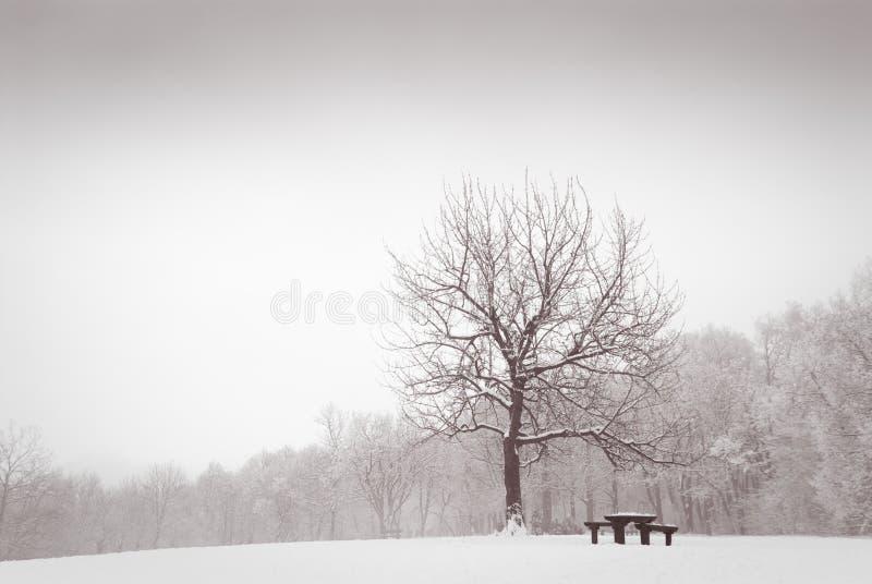 Prado del invierno con el árbol de roble solo fotografía de archivo libre de regalías