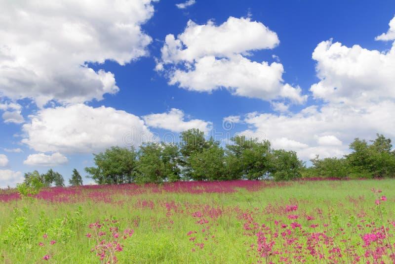 Prado del resorte con los wildflowers en Bucha, Ucrania imagenes de archivo
