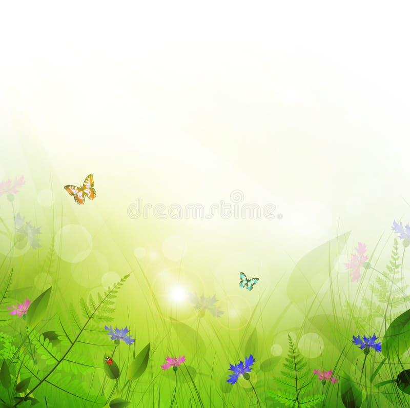 Prado del verano stock de ilustración