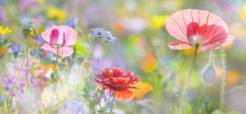 Prado del verano foto de archivo