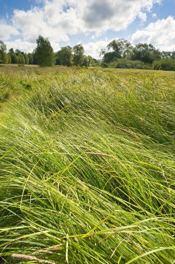 Prado del verano con la alta hierba fotos de archivo