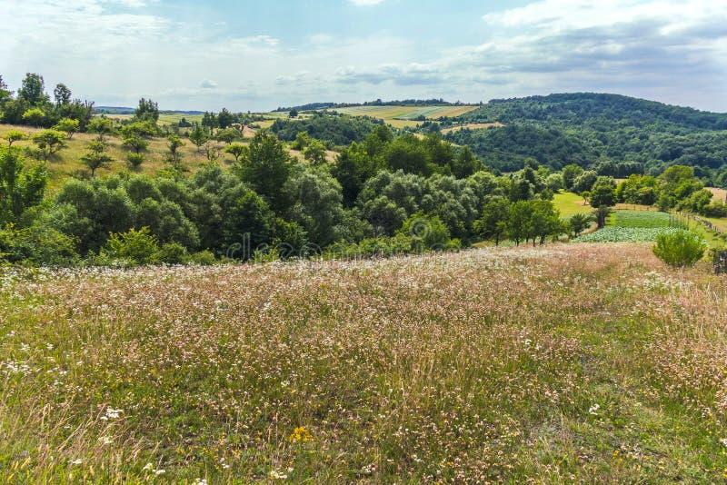 Prado del verano con las flores, la hierba, los árboles y los arbustos contra el contexto de colinas verdes y de un cielo nublado fotos de archivo libres de regalías