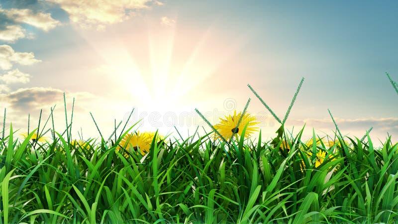 Prado del verano en d?a soleado brillante libre illustration