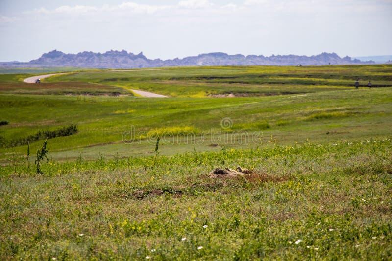 Prado delante de formaciones de roca del desierto imagenes de archivo