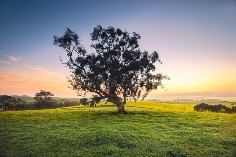 Prado do nascer do sol fotografia de stock royalty free