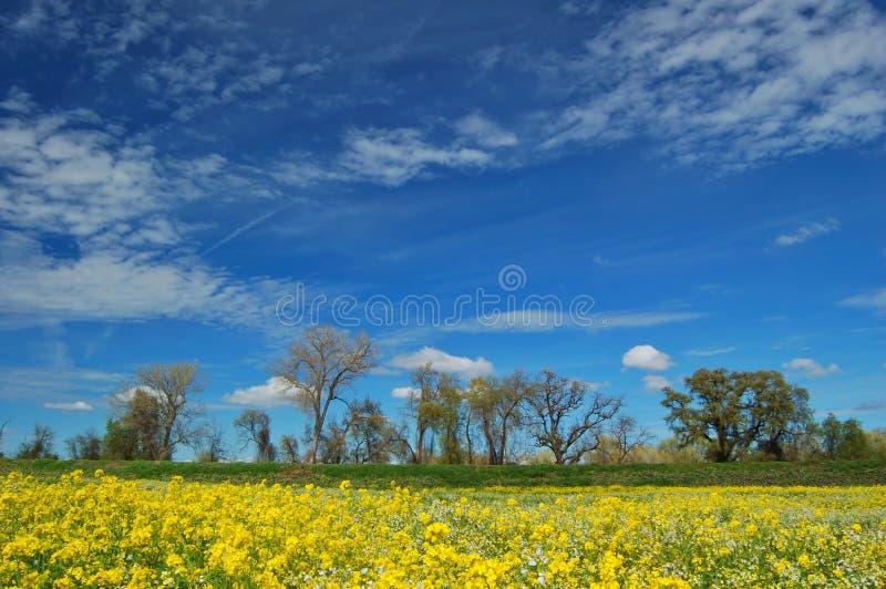 Prado do Springtime imagens de stock royalty free